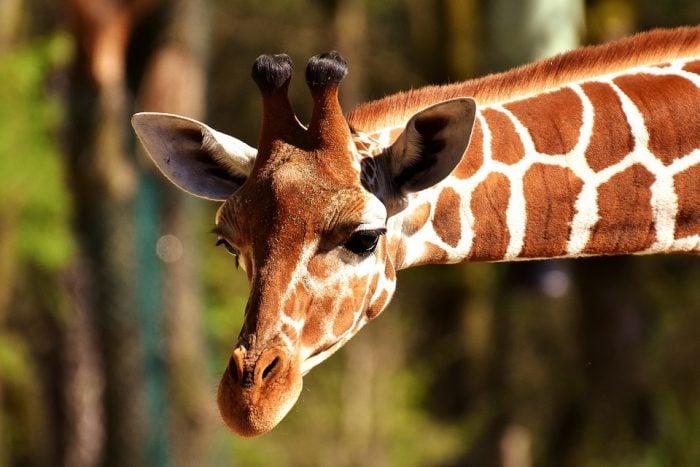 5 cose fondamentali da sapere sugli animali