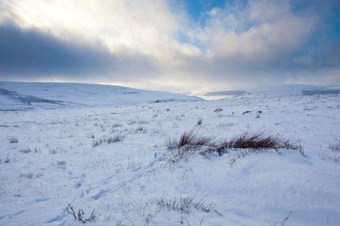 Artico: il cambiamento climatico fa crescere piante molto più alte!