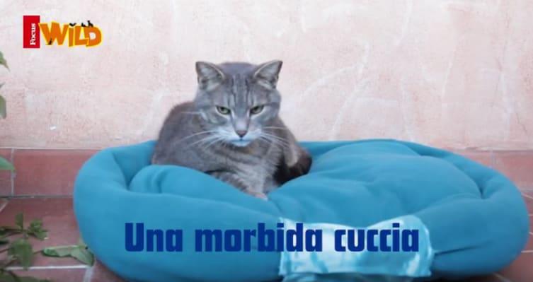 Come realizzare una cuccia per il nostro gatto! (VIDEO)