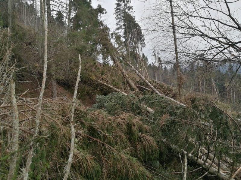 Le foreste rase al suolo dal maltempo: cosa è successo e perché