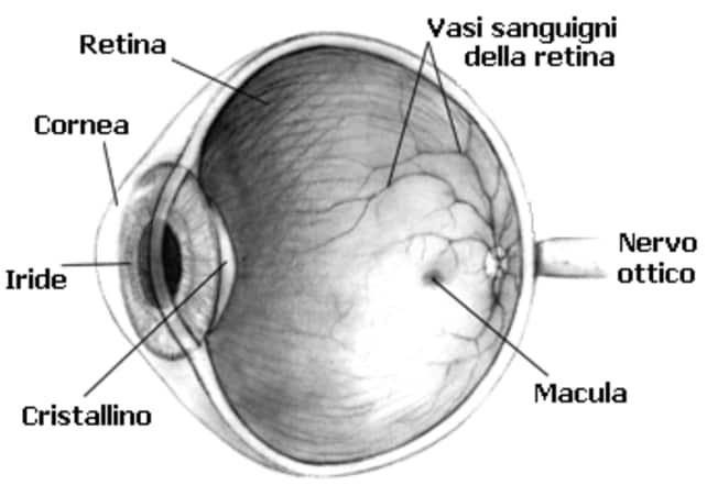 occhio e vista