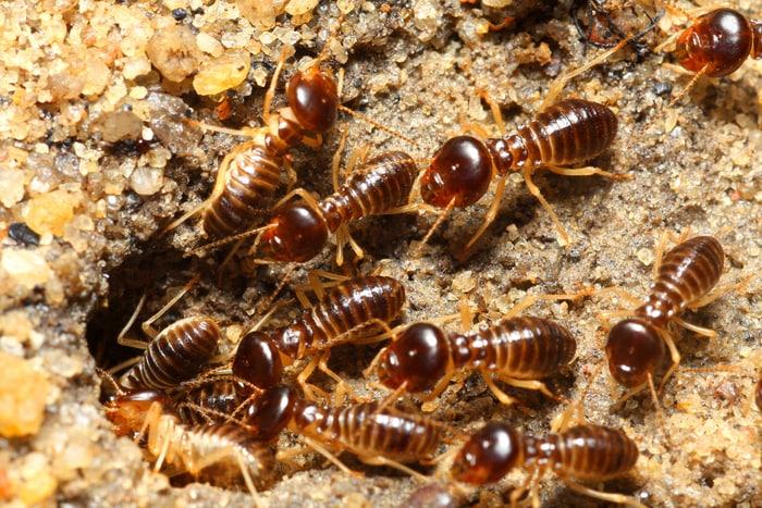 Brasile: l'antica città delle termiti è visibile dallo spazio!