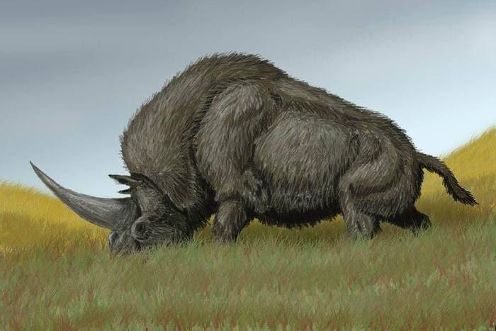 """Il DNA dell'antico """"unicorno siberiano"""" ci rivela nuovi segreti!"""