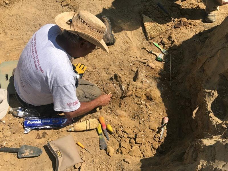 Al cinema | Dinosaurs, il viaggio dei dinosauri dagli scavi al museo