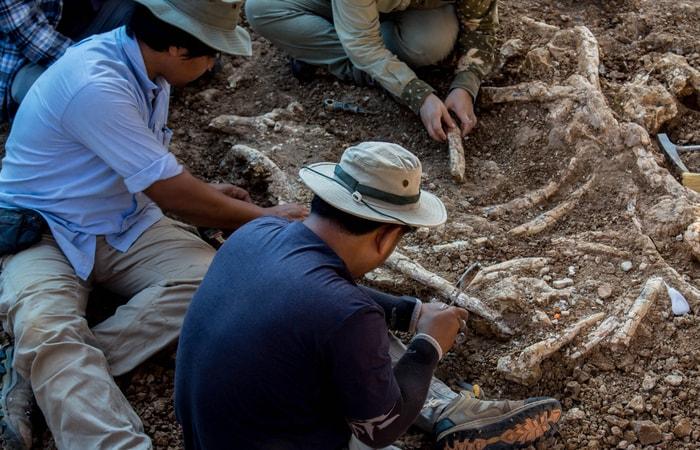 Saltriovenator zanellai: Il più grosso predatore del Giurassico è italiano!