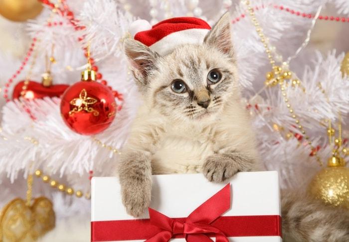 Animali Natale Immagini.Animali Natalizi E Coccolosi Gallery Focus Junior