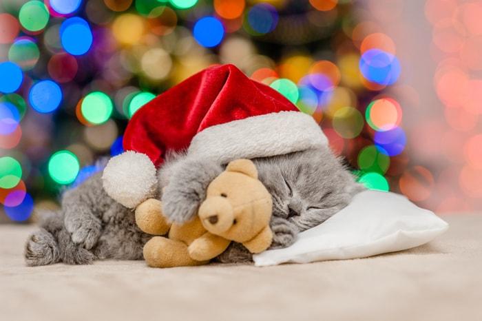 Animali natalizi e coccolosi! (GALLERY)