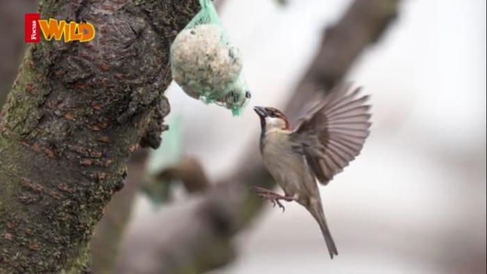 Costruiamo una MANGIATOIA per uccellini