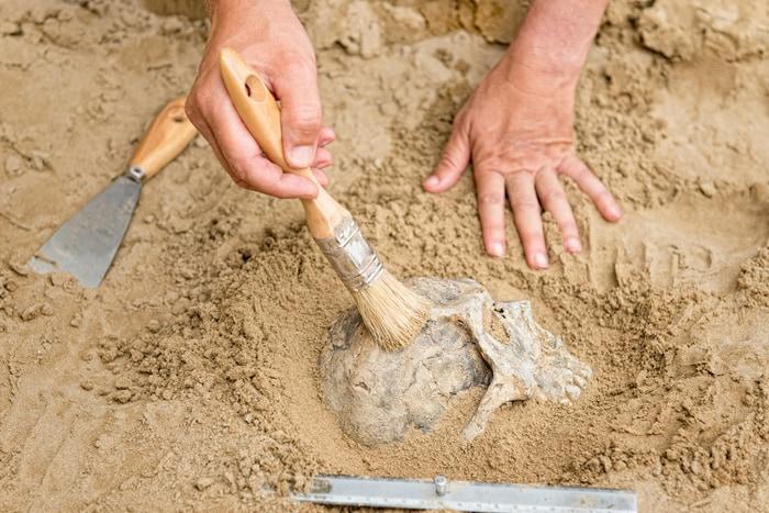 """Little Foot, l'australopiteco """"misterioso"""" è stato il primo bipede?"""