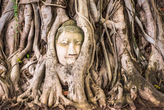 Dieci cose che non sai sugli alberi
