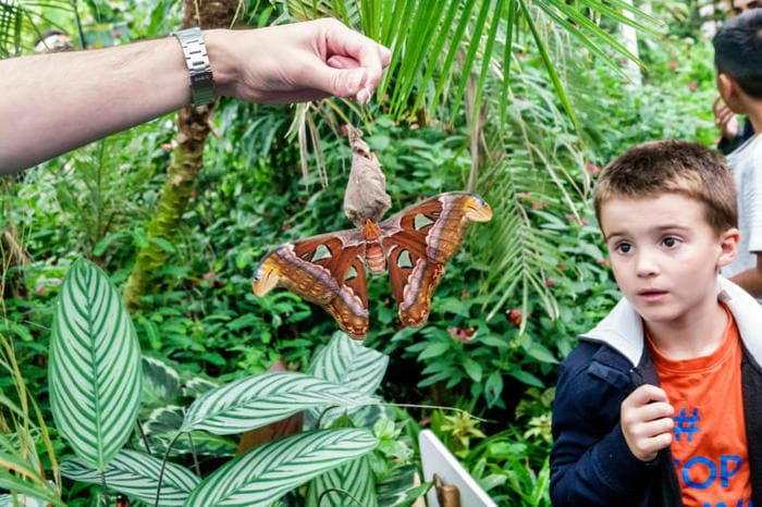 I 5 insetti più grandi del mondo!