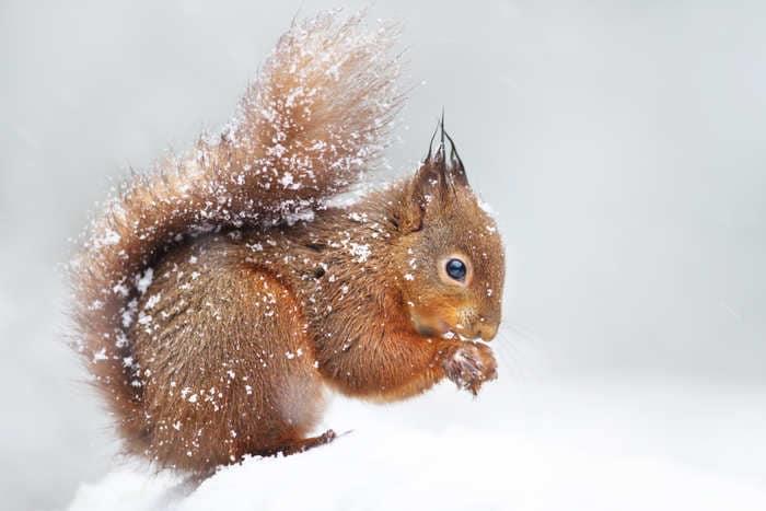 Animali nella neve