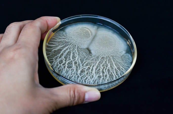 Un esperimento durerà 500 anni per studiare la vitalità dei batteri