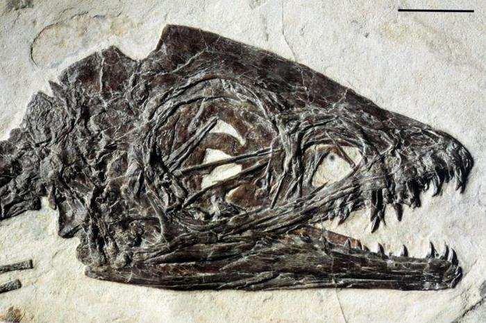 Il dinosauro Ciro ha dei fratelli?