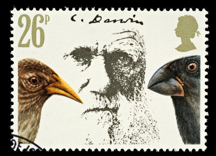 Darwin Day: il mondo celebra il teorizzatore dell'evoluzione
