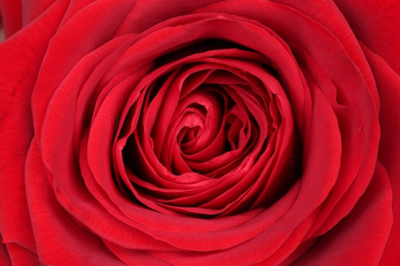 Dieci curiosità su San Valentino