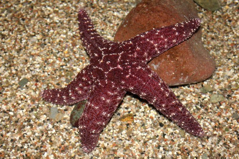 Come si fa a diventare biologi marini?