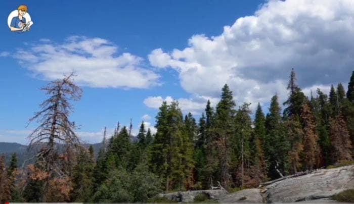 5 cose che non sai sugli alberi (VIDEO)