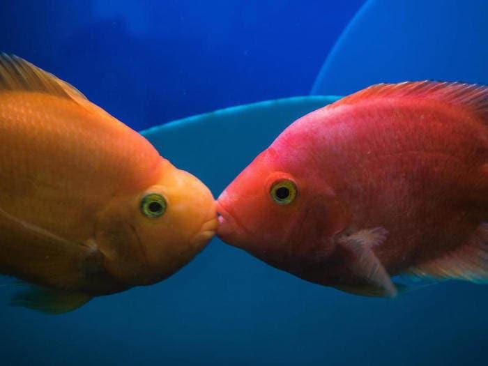 baci animali