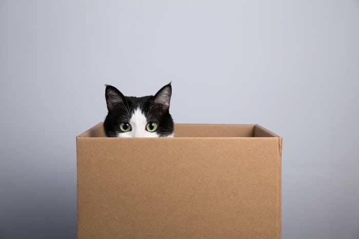 20 stupende frasi e aforismi sui gatti