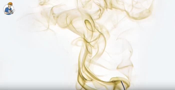5 cose che non sai sull'olfatto degli animali (VIDEO)