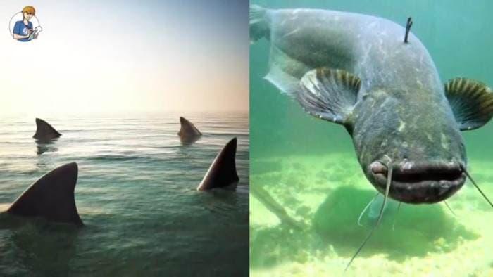5 cose che non sai sui pesci (VIDEO)