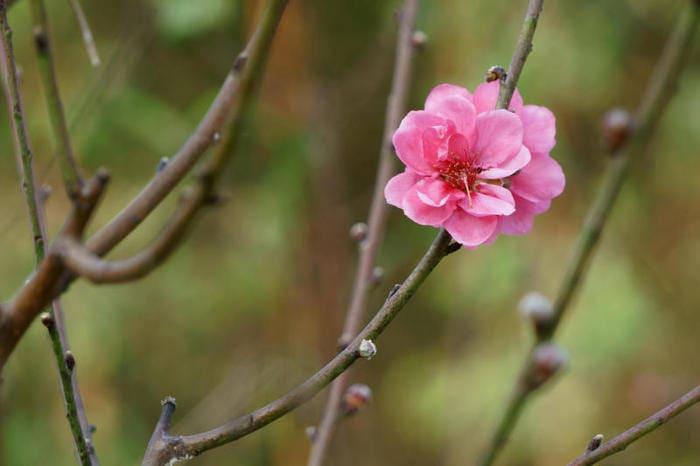 Equinozio di primavera: quand'è e di cosa si tratta