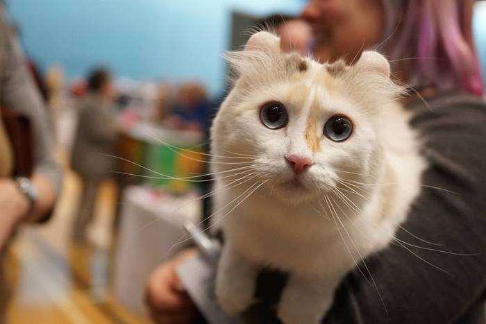LondonCats: la Mostra Internazionale del gatto è a Milano