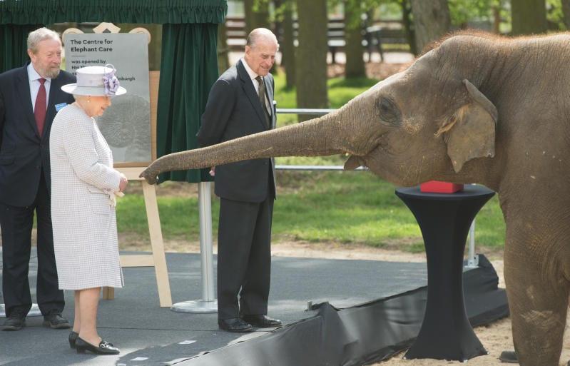 Elefanti: 10 curiosità che (forse) non sai