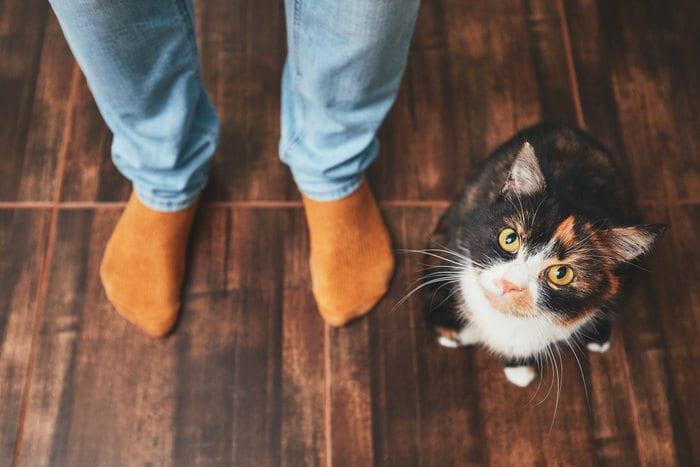I gatti sanno riconoscere il proprio nome? Secondo la scienza sì