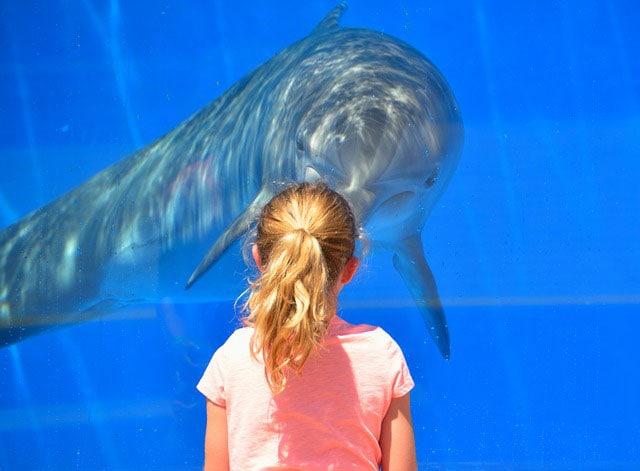 Delfini: vietato fare il bagno con loro, si stressano troppo