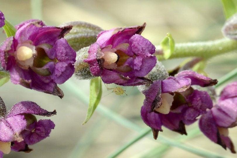 Junior reporter, l'evoluzione intelligente delle orchidee