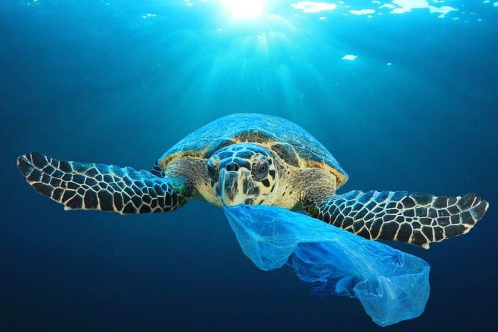 Giornata mondiale degli oceani: perché abbiamo il dovere di proteggerli