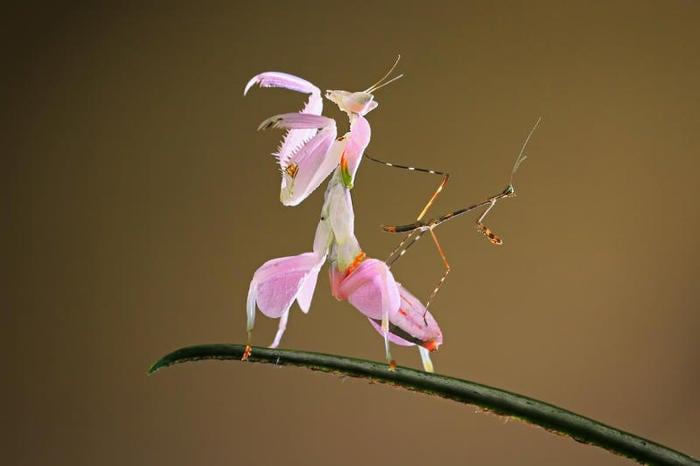 Macro fotografie di insetti in Indonesia (VIDEO)