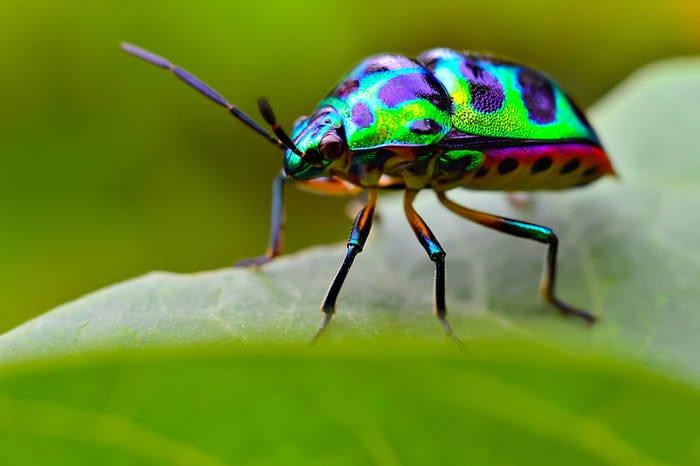 5 cose che non sai sugli insetti
