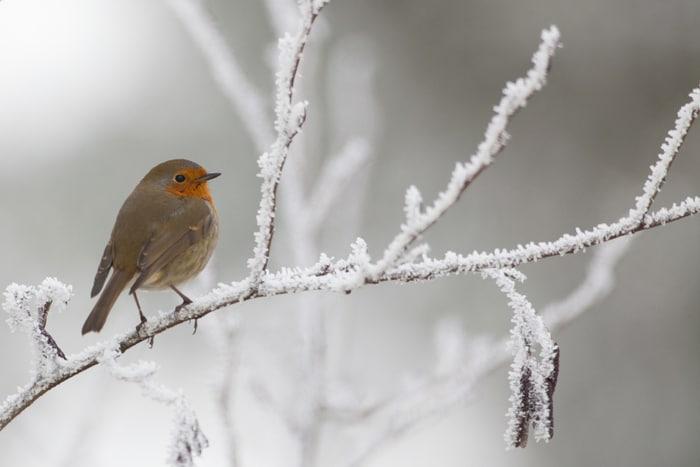Come fanno gli uccelli a difendersi dal freddo? (VIDEO)