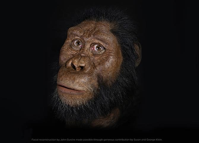 Ricostruito in 3D il volto del prozio di Lucy