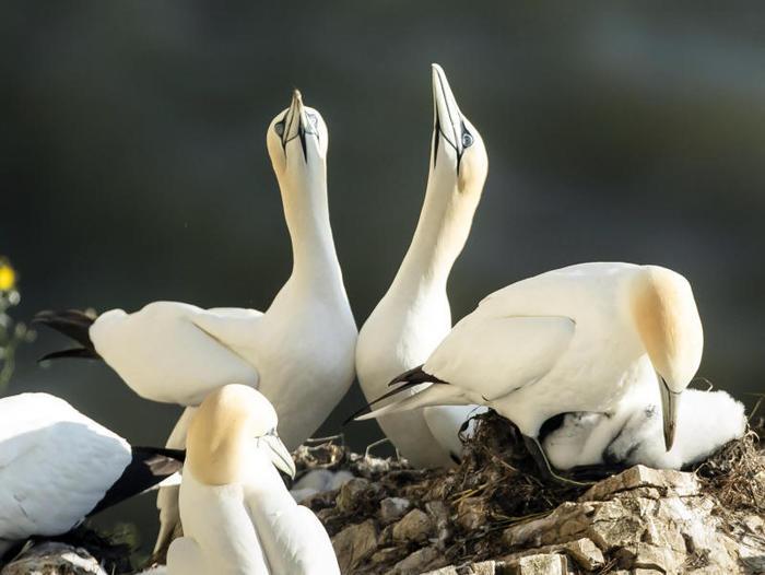 Bempton Cliffs, la riserva naturale degli uccelli marini (Gallery)