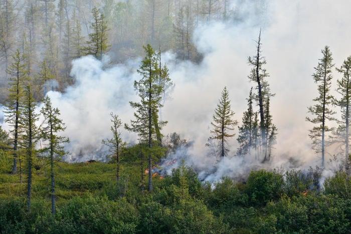 Incendio in Siberia: cosa sta succedendo nel Nord del mondo?