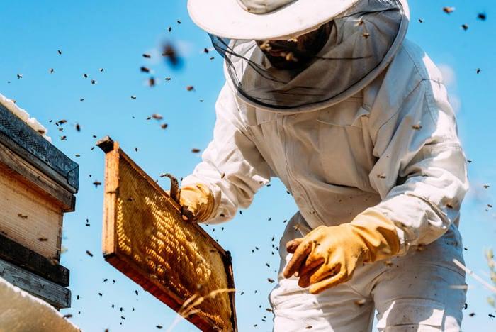 Impollinazione e miele: l'importanza delle api spiegata da un vero esperto