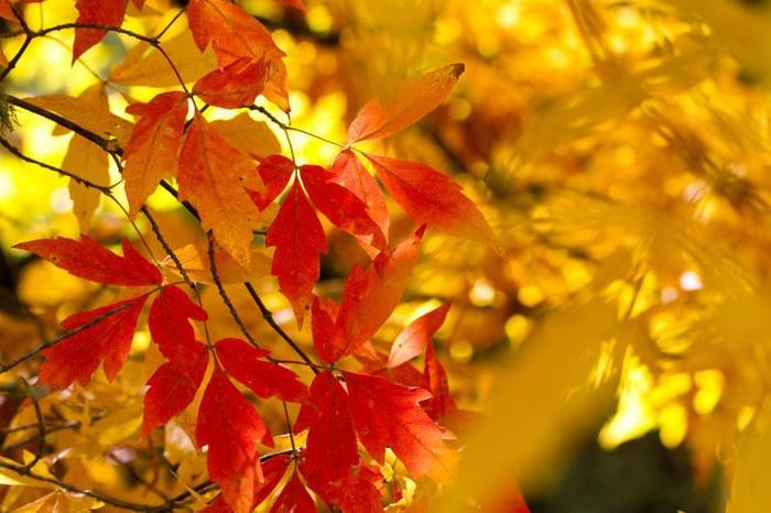 Equinozio d'autunno: quand'é?