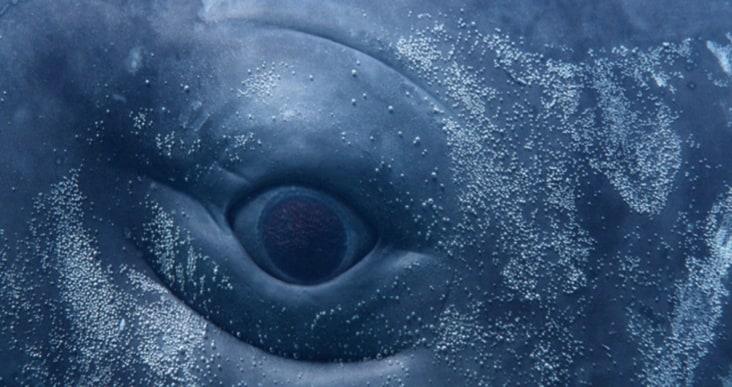 Digital Whales: le balene arrivano a Milano!