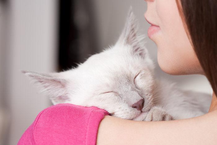 Gatti troppo indipendenti? Macché, sono affettuosi come bimbi