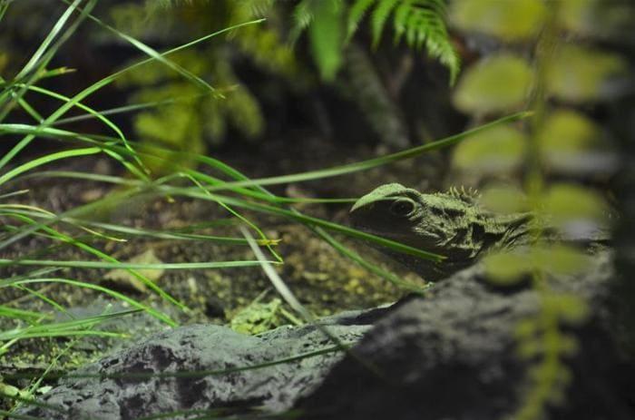 Fossili viventi