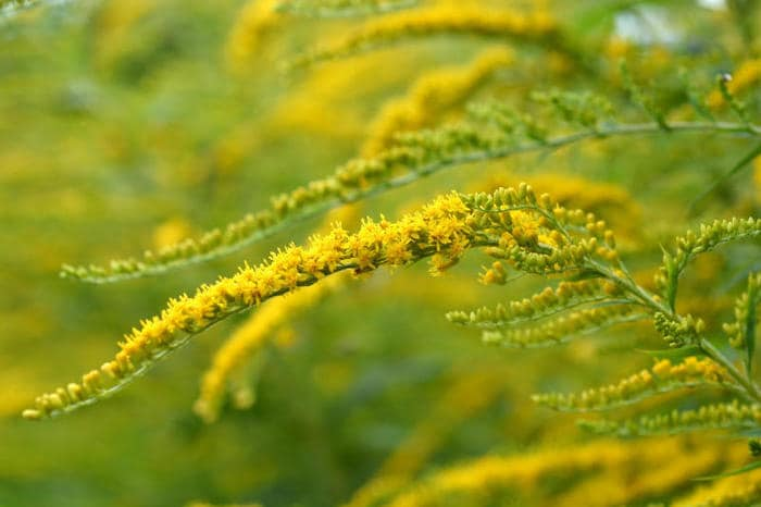 """L'odore della paura: ecco come le piante """"gridano"""" aiuto"""
