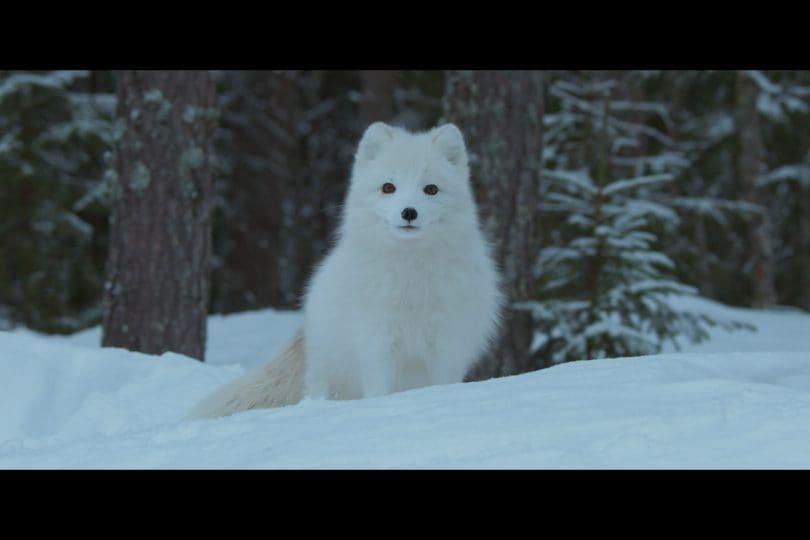 Fabio Volo presenta Ailo, un'avventura tra i ghiacci