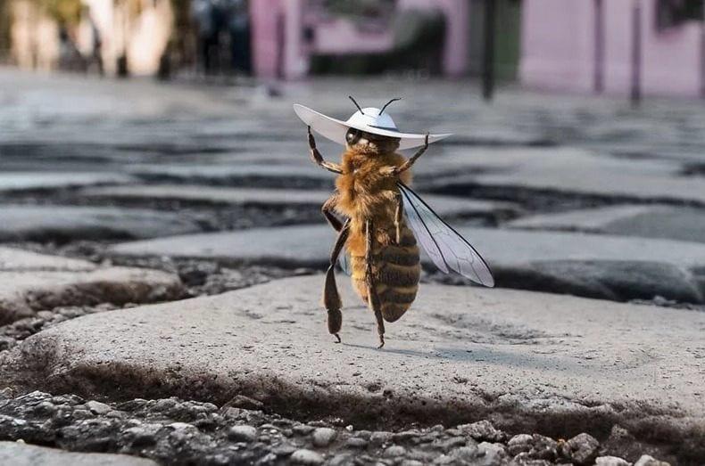 B, l'ape influencer che vuole salvare la sua specie