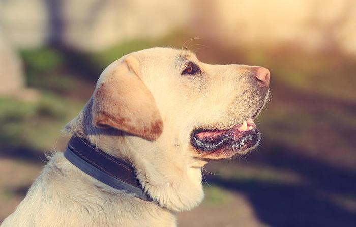 Età dei cani: uno studio rivela un nuovo modo per calcolarla
