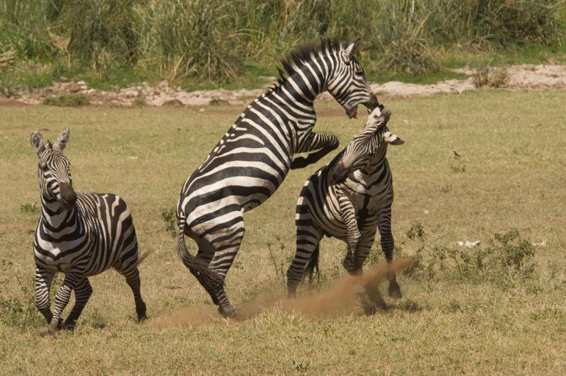 Lotte bestiali: i segreti dei combattimenti animali…A calci e pugni!