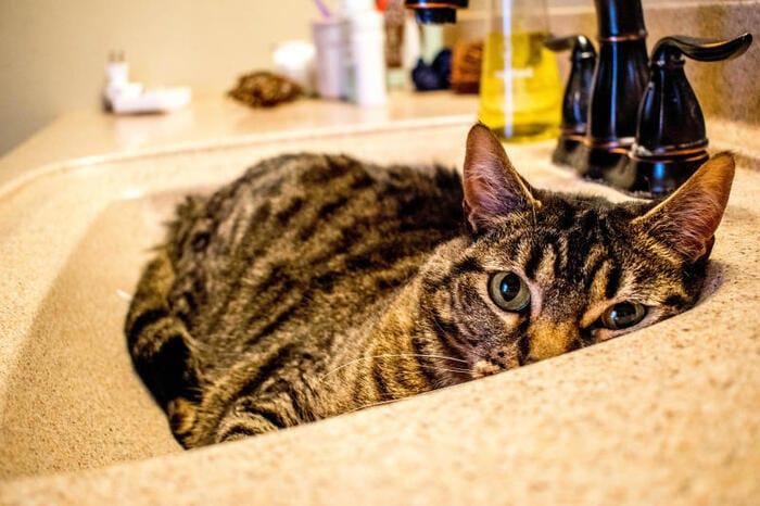 Il 17 febbraio è la giornata del gatto